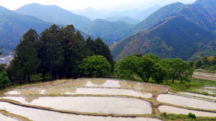 高原の棚田
