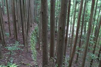 植林に埋もれていく住居あと