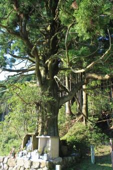 清姫のねじ木