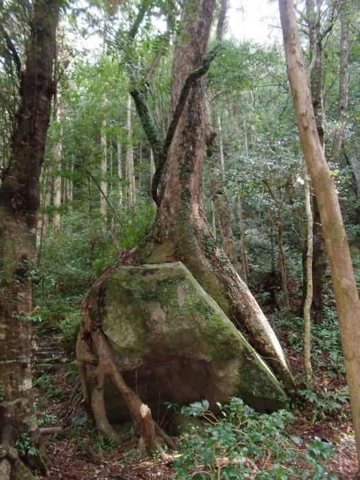 滝尻王子・社殿裏の樹木