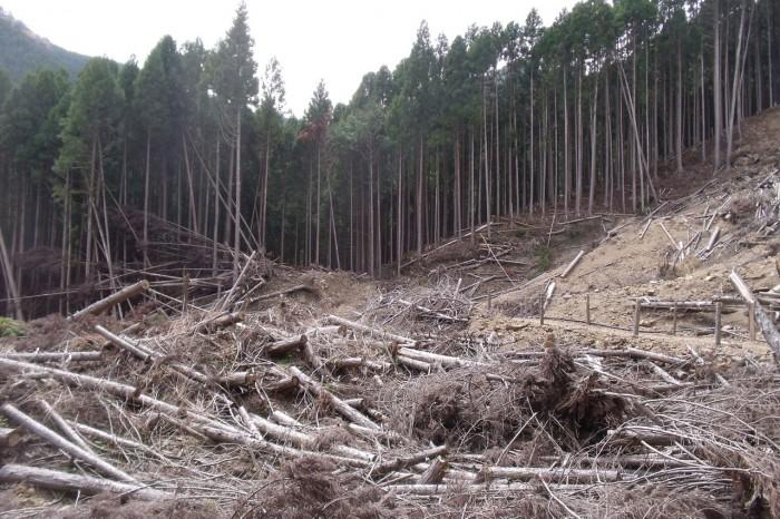 古道脇の土砂崩れ現場