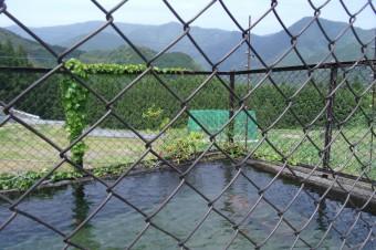 古道沿いの池
