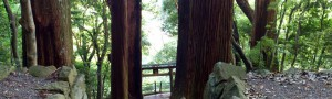 巨木に囲まれた参道